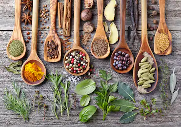Reflections on Herbal Medicine with Jessica Baker